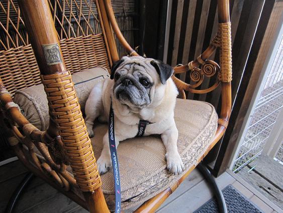 チッチ、このゆりかご椅子が気に行った様子・・・