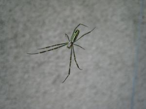 クモ、蜘蛛1