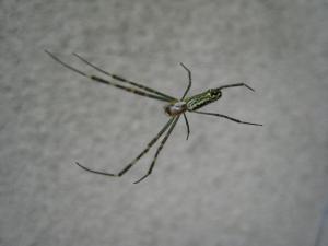 クモ、蜘蛛2