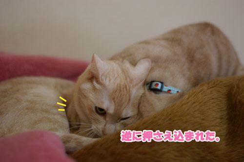 11_20110305074758.jpg