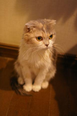 IMGP1251ー猫