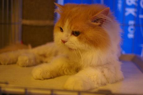 IMGP1307ー猫