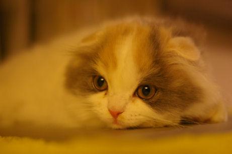 IMGP1350ー猫