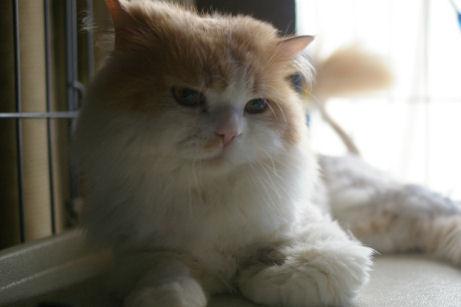 IMGP1339ー猫