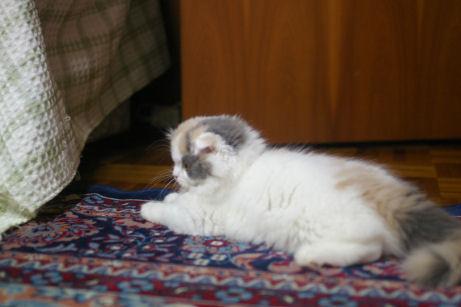 IMGP1427-猫