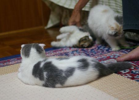 IMGP1437ー猫