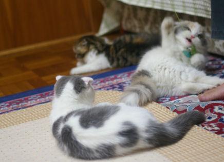 IMGP1438ー猫