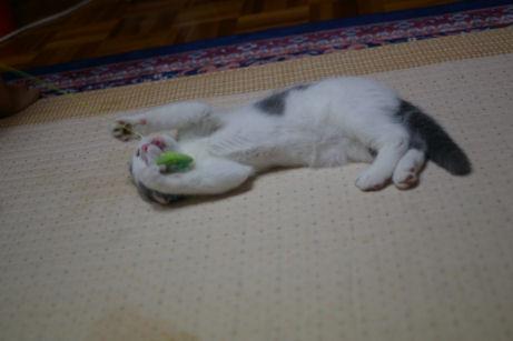 IMGP1439ー猫