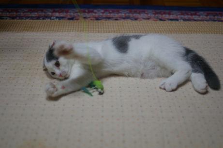 IMGP1440ー猫