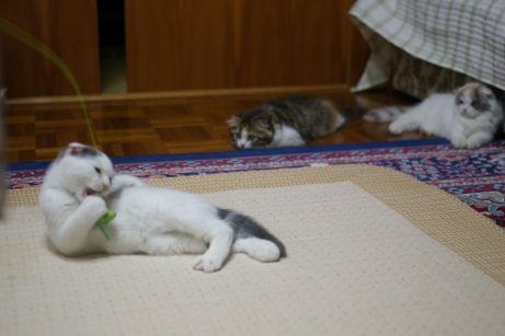IMGP1441ー猫