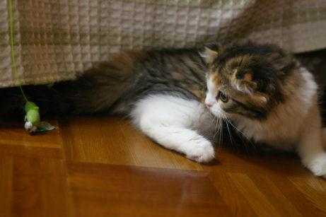 IMGP1446ー猫