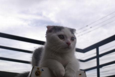 IMGP1411ー猫