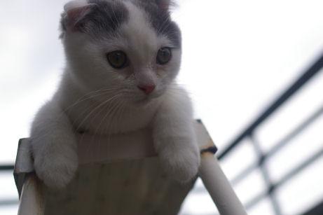 IMGP1416ー猫
