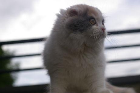 IMGP1417ー猫