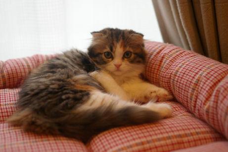 IMGP1199ー猫