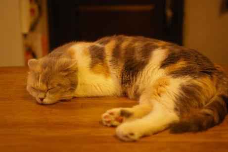 IMGP1488ー猫