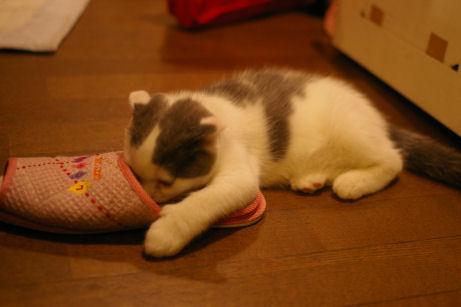 IMGP1464ー猫