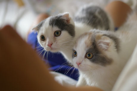 IMGP1590ー猫