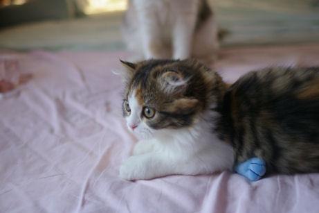 IMGP1642ー猫