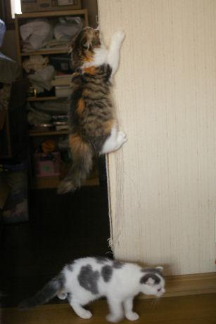 IMGP1605ー猫