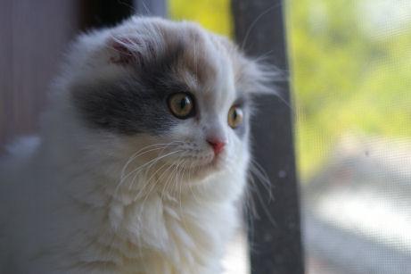 IMGP1623ー猫