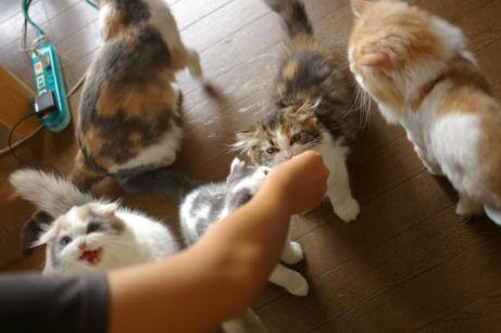 IMGP1709ー猫