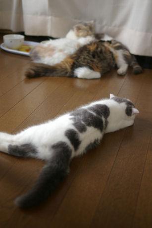IMGP1751ー猫
