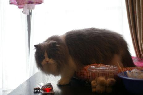IMGP1752ー猫