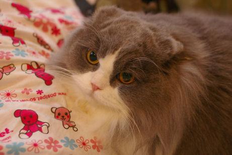 IMGP1764ー猫