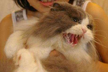IMGP1782ー猫