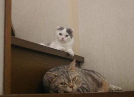 IMGP1392ー猫