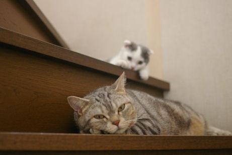 IMGP1394ー猫