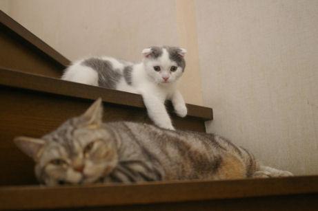 IMGP1396ー猫
