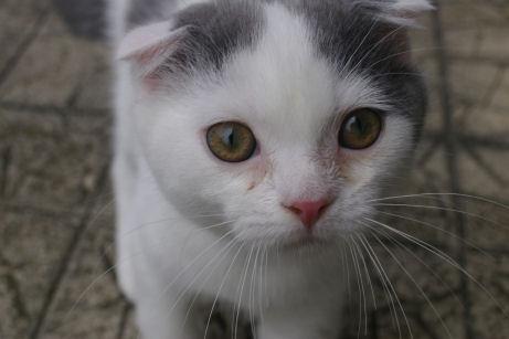 IMGP1405ー猫