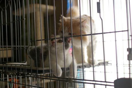 IMGP1869ー猫