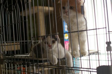 IMGP1871ー猫