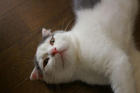IMGP1968ー猫