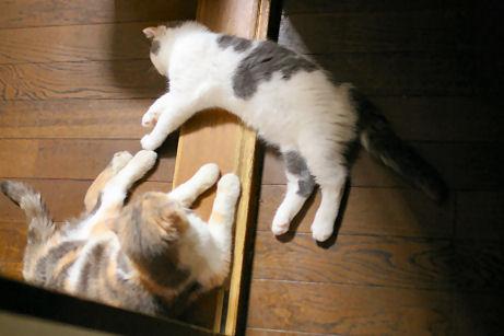 IMGP1829ー猫