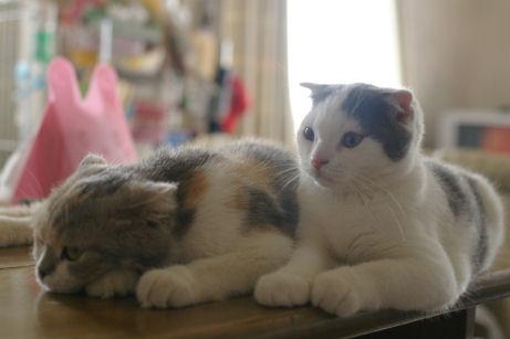 IMGP2021ー猫