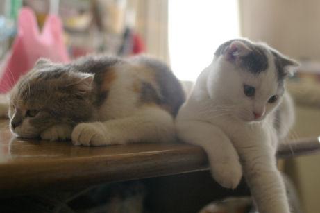 IMGP2022ー猫