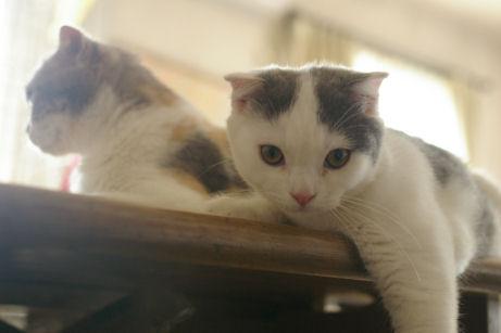 IMGP2026ー猫