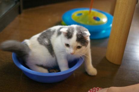 IMGP2046ー猫