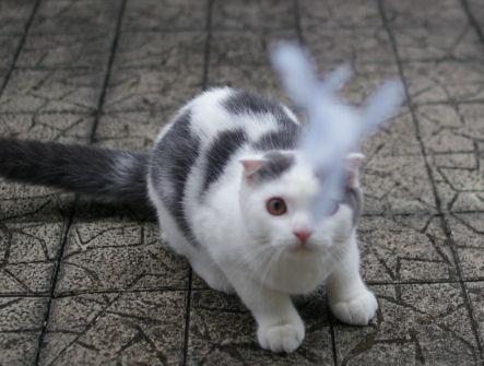 IMGP2078.-猫