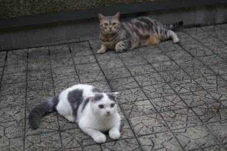 IMGP2089ー猫