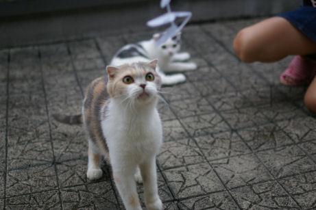 IMGP2096ー猫