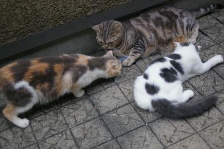 IMGP2102ー猫