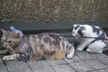 IMGP2105ー猫