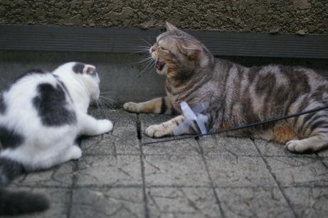IMGP2108ー猫