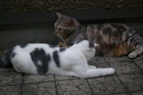 IMGP2109ー猫
