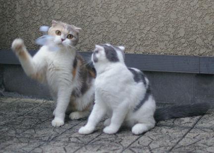 IMGP2115ー猫
